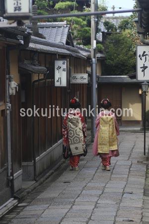 京都にいる舞妓さんがおいでやす